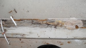 Wet Rot in Skirting Board